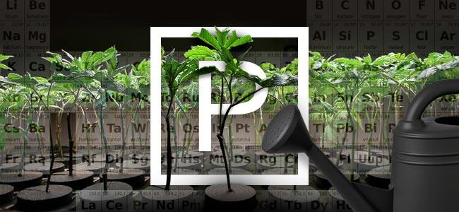 Phosphorus And Growing Weed