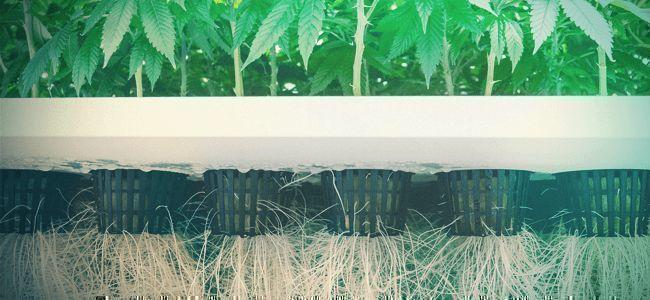 What Are Aeroponics And Aero-hydroponics?