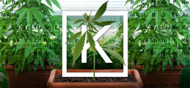 Potassium And Growing Weed