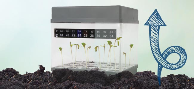How Often Do Seedlings Need Water