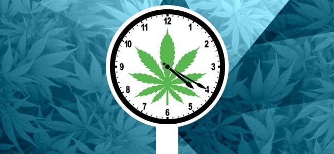 When To Lollipop Cannabis
