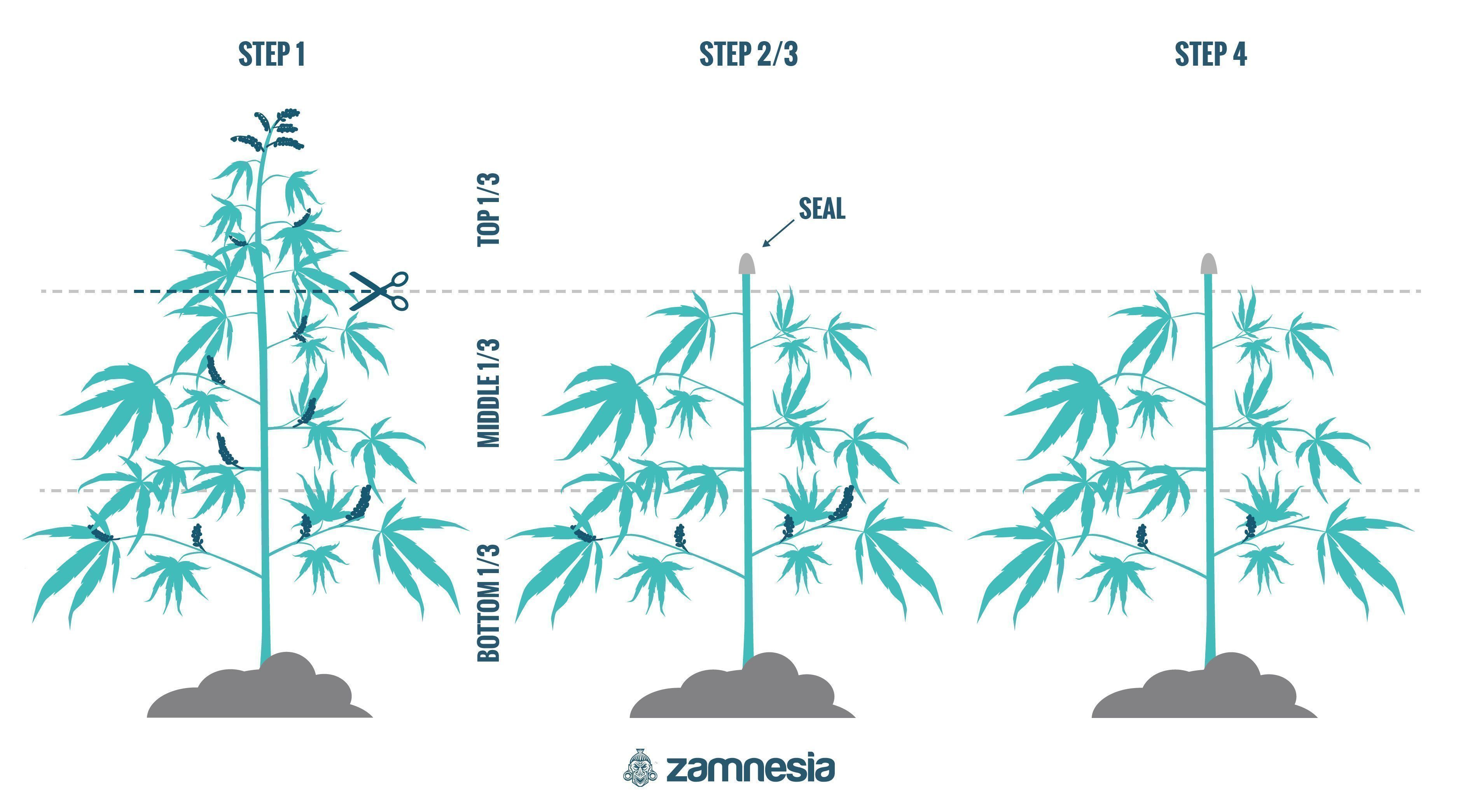 How To Regenerate Cannabis Plants