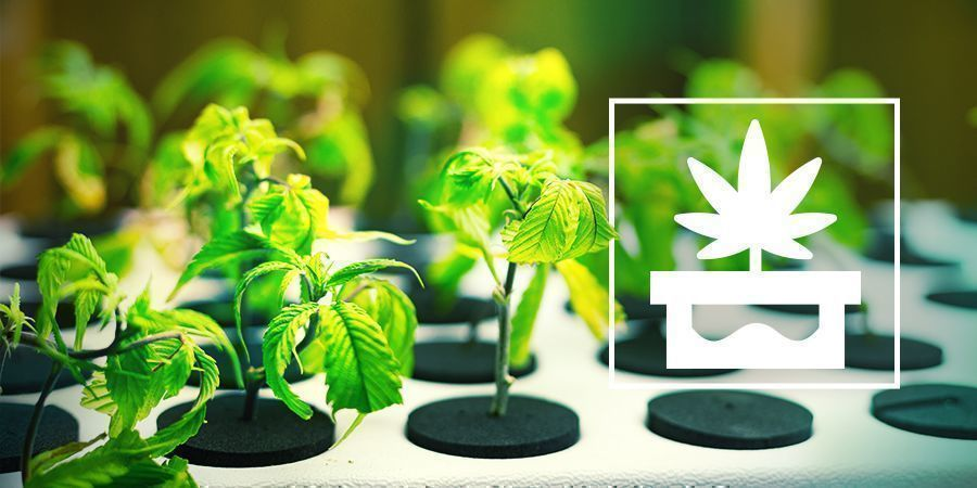 Growing Marijuana With Advanced Hydroponics