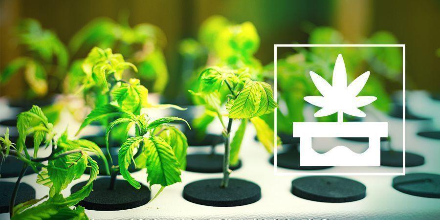 Cannabis Anbauen In Fortgeschrittenen Hydroponischen Systemen