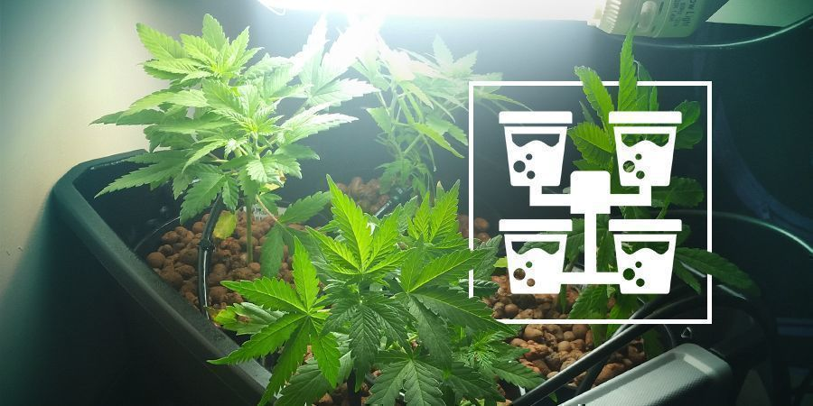 Hydro Setup Types For Cannabis