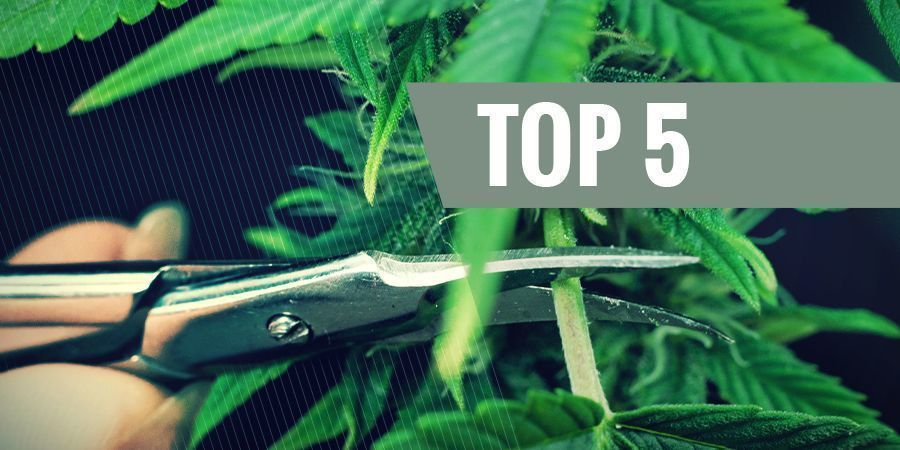 THE 5 MOST COMMON TRIMMING TECHNIQUES