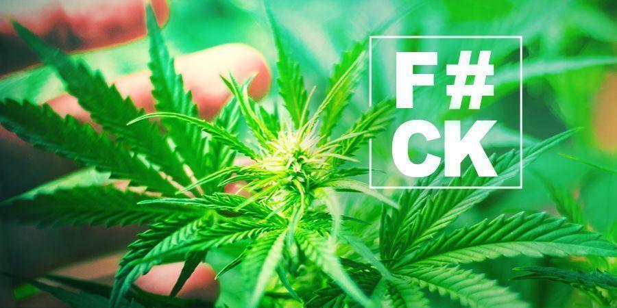 Cannabis Fimming: Alles Was Du Wissen Musst