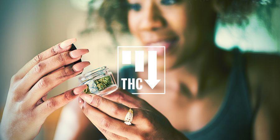 Wirkung von Cannabis Ruderalis