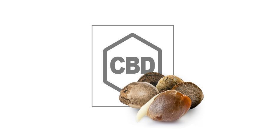 Top 10 CBD-Cannabissamen