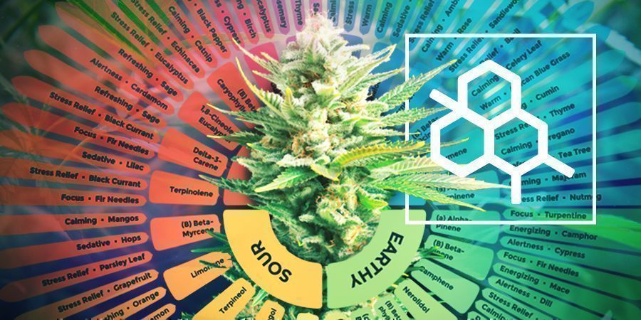 The Difference Between Terpenes And Terpenoids