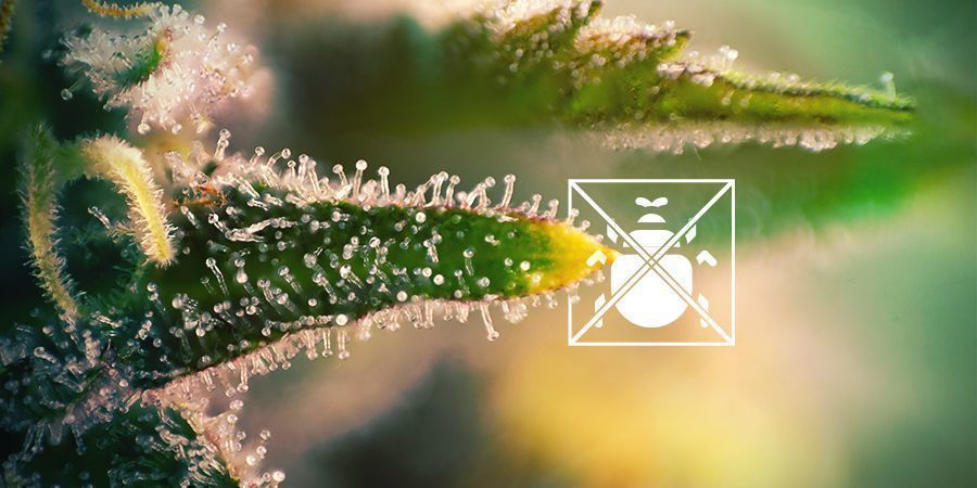 WHAT ARE TRICHOMES FOR?