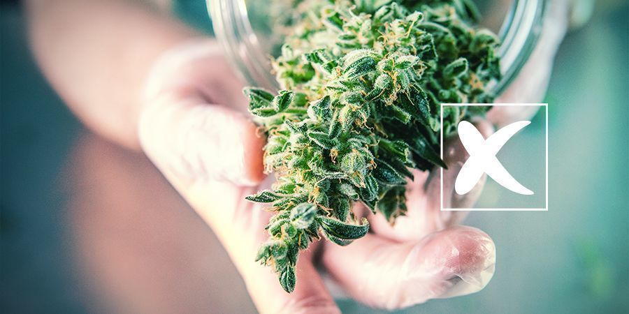 Reguläre Cannabissamen: Die Nachteile