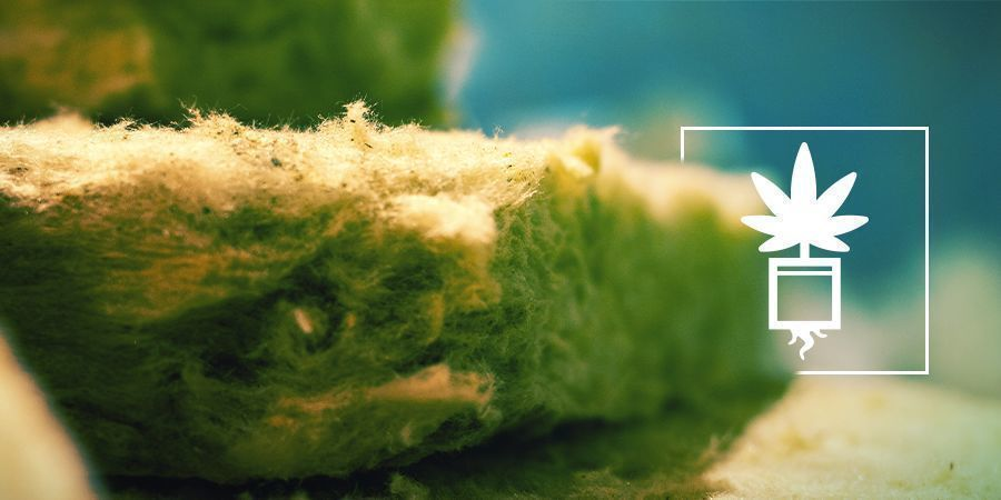 Cannabisanbau In Steinwolle