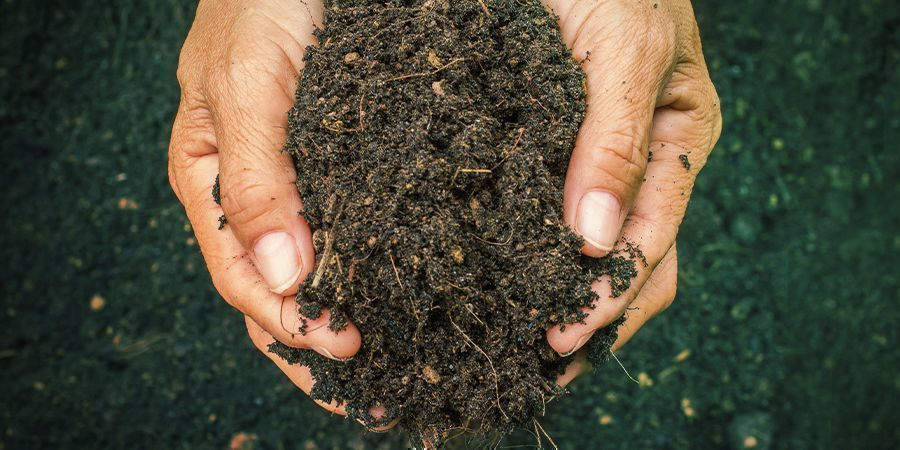How To Recognise Good (And Bad) Soil