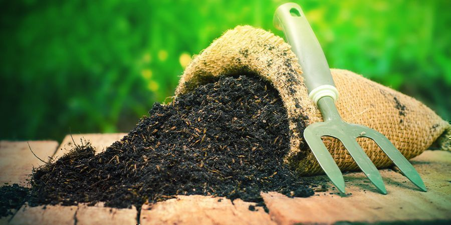 Best Soil For Indoor And Outdoor Cannabis