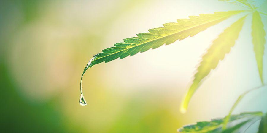 Spüle Die Pflanzen Vor Der Ernte