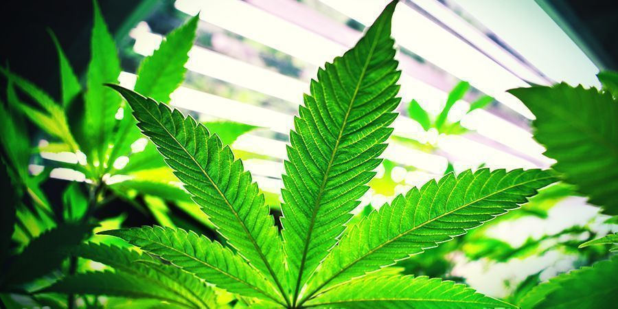 Best Grow Room Circumstances For Vegetation
