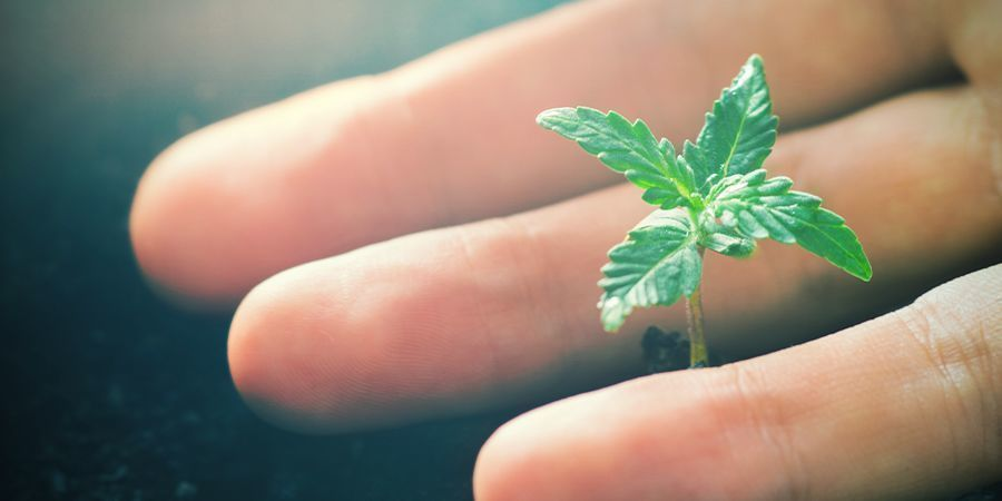 Positive Effects Of CO₂ On Cannabis Plants