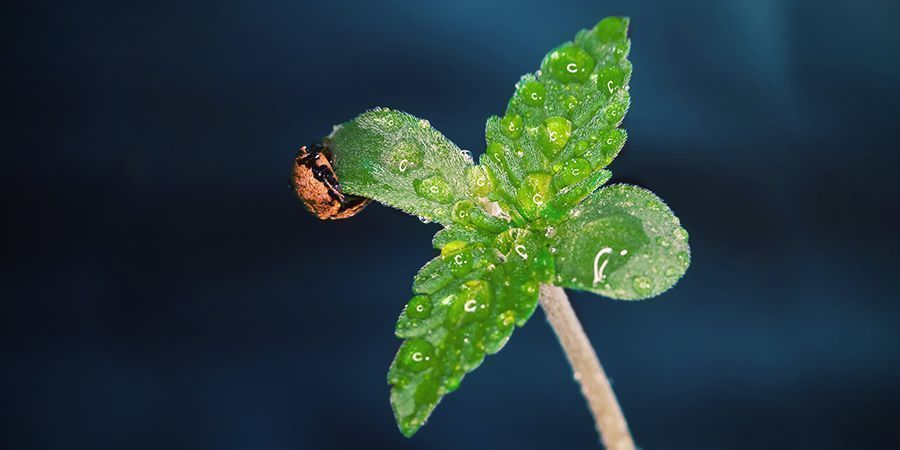 Wann Du CO₂ Für Deine Pflanzen Nutzen Solltest