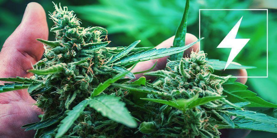 Strom Und Cannabis Anbau