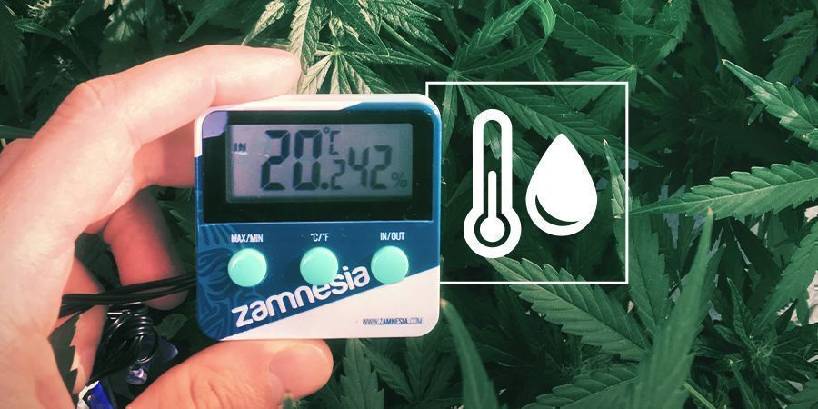 Humidity In The Cannabis Grow Space