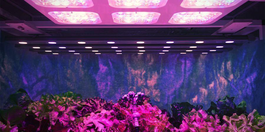 Light Strength Per Plant