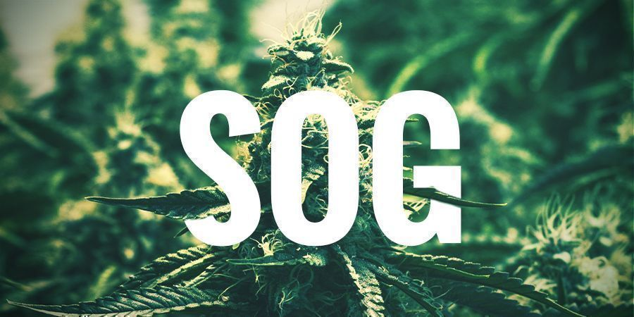 SOG — SEA OF GREEN