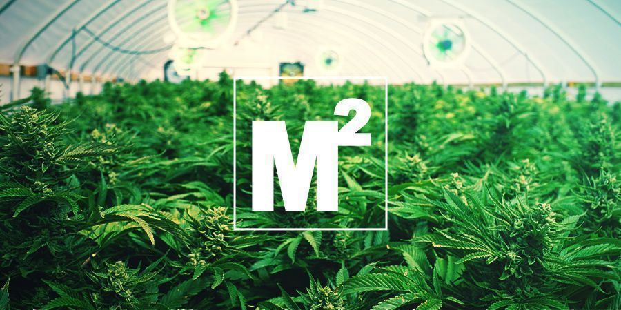 HOW MANY MARIJUANA PLANTS CAN BE GROWN PER SQUARE METRE?