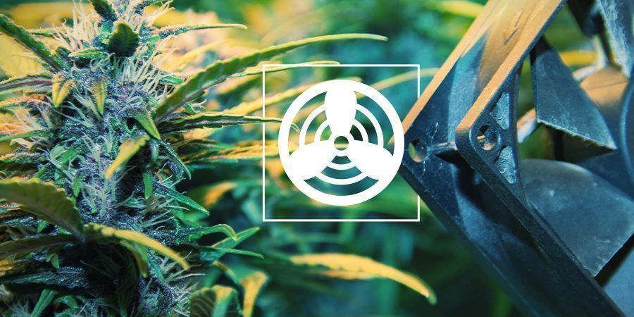 Ventilation In The Cannabis Grow Space