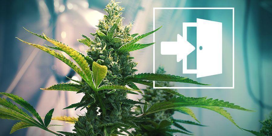 Indoor Cannabis Growing