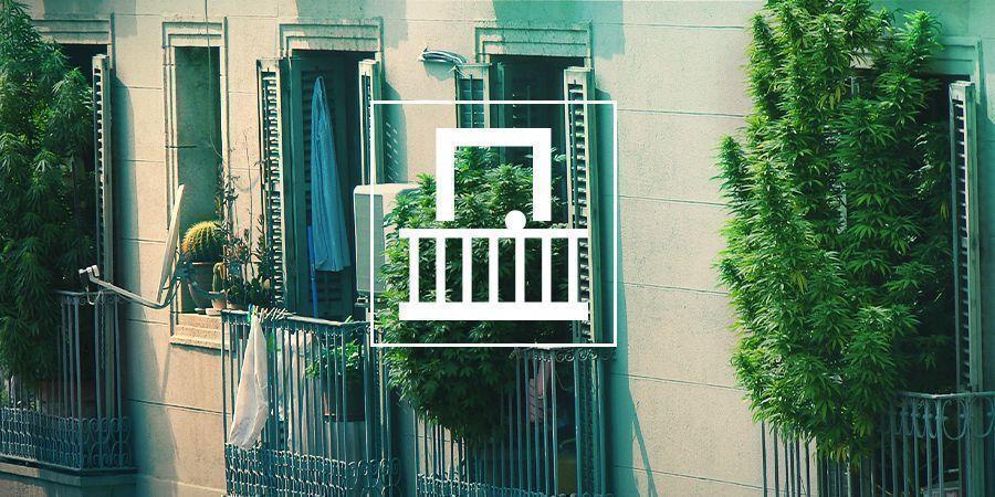 Grow Cannabis On Your Balcony Or Terrace