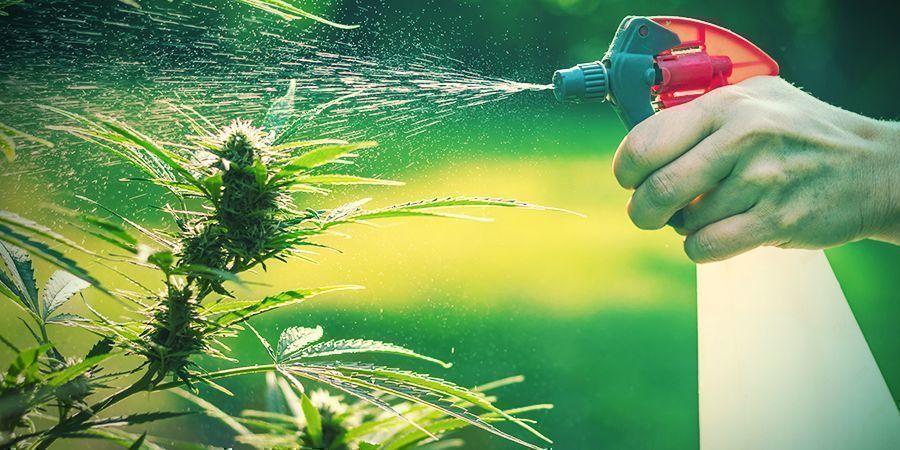 Garden & Backyard Growing: Advantages And Disadvantages