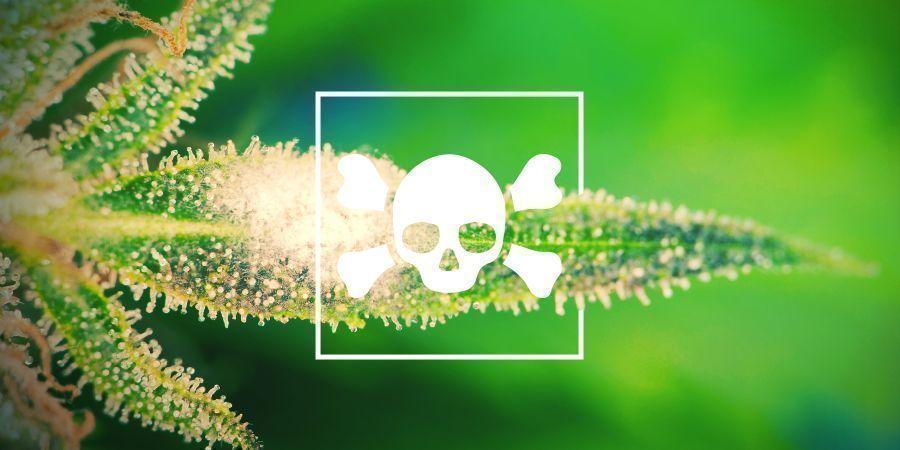Cannabis Diseases