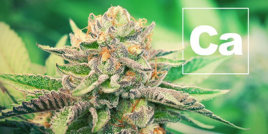 Calcium And Cannabis Plants
