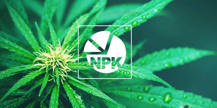 NPK: Was ist das beste Verhältnis für den Cannabisanbau