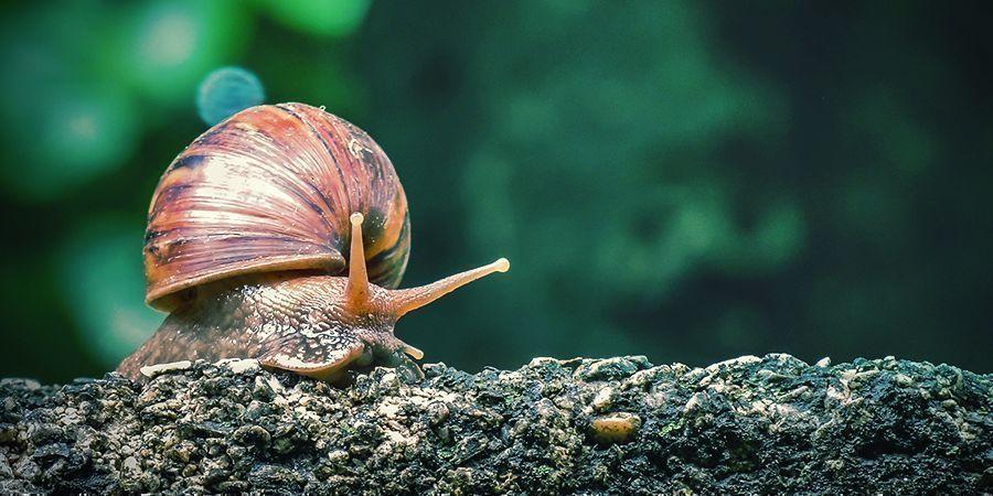 Snail & Slug