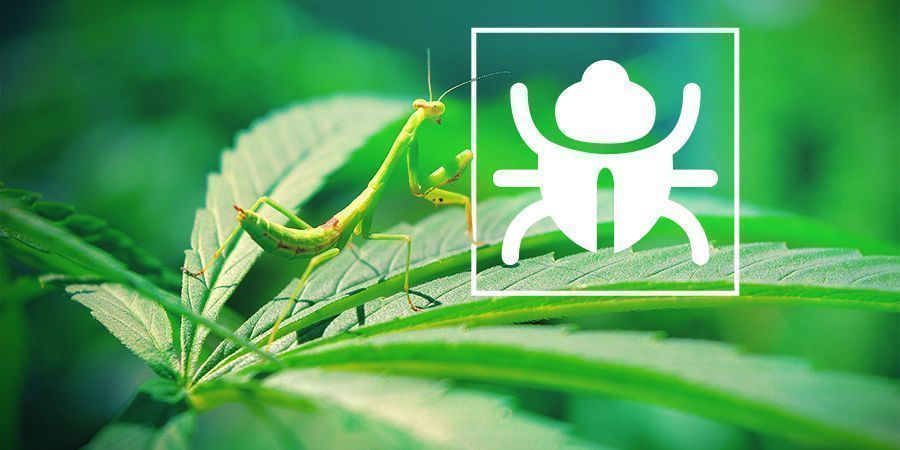 Pesky Bugs & Insects