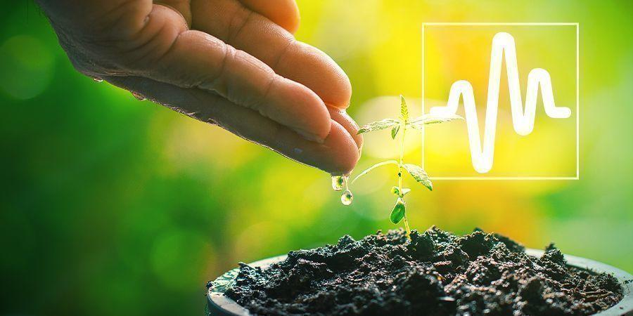 Plantenverzorging