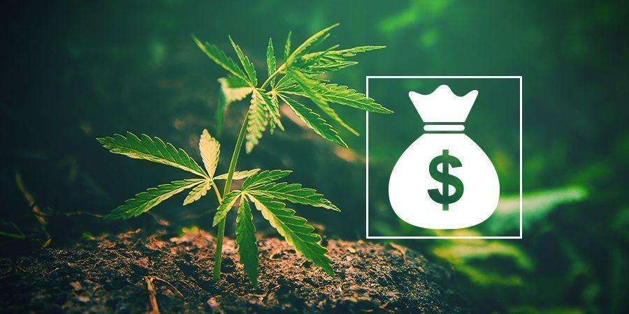 Warum sollte man sein eigenes Cannabis anbauen?