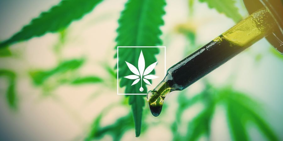 WHICH EXTRACTION METHODS ARE USED TO MAKE CBD OIL?