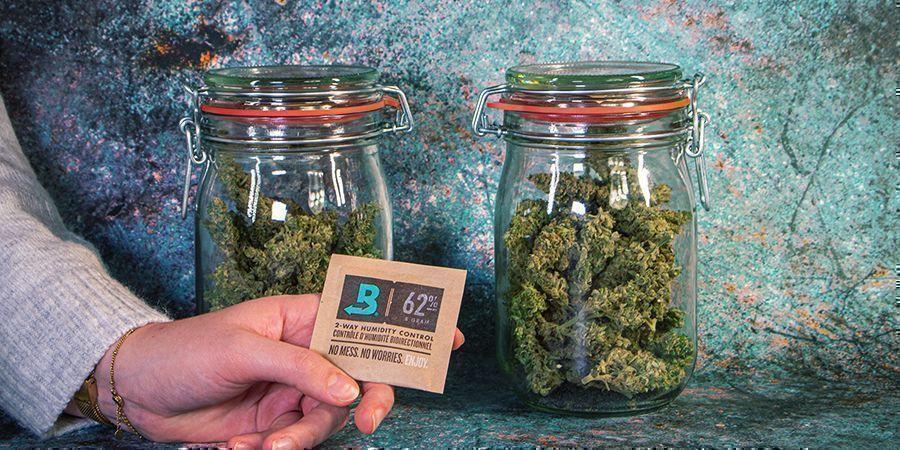Cannabis Nach Der Ernte Lagern