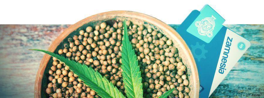 Information Über Cannabissamen