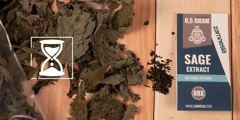 How long do the effects of Salvia divinorum last?