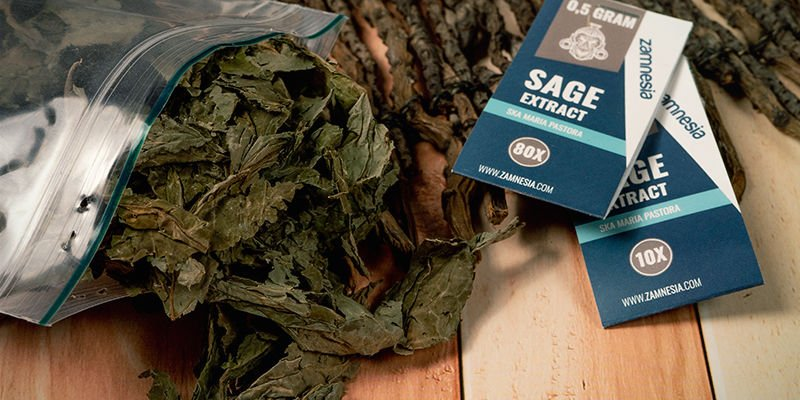 Which Types Of Salvia Are Available?
