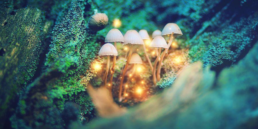 Beliebte Substanzen Für Microdosing