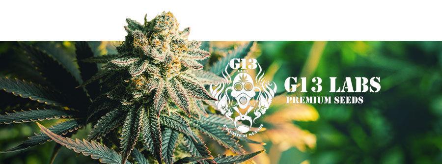 G13 Labs - Cannabis Seeds
