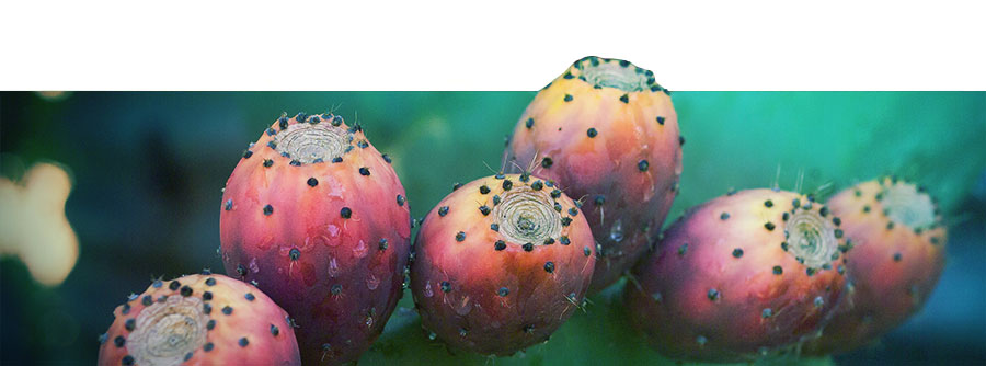 The Ultimate Mescaline Cactus Guide