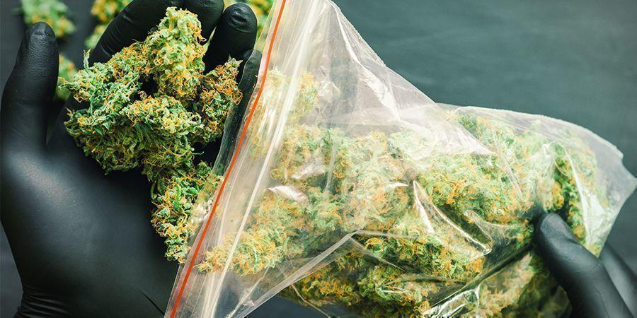 Was sind die Cannabissorten mit dem höchsten Ertrag von Sensi Seeds?