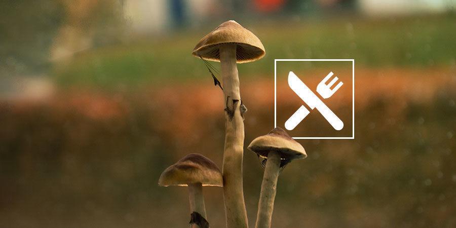 How Do You Take Magic Mushrooms?
