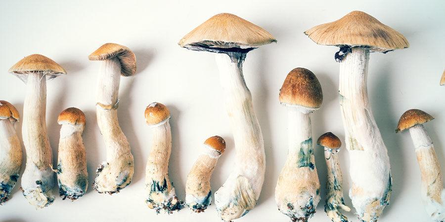 Different Species of Psilocybin Mushroom